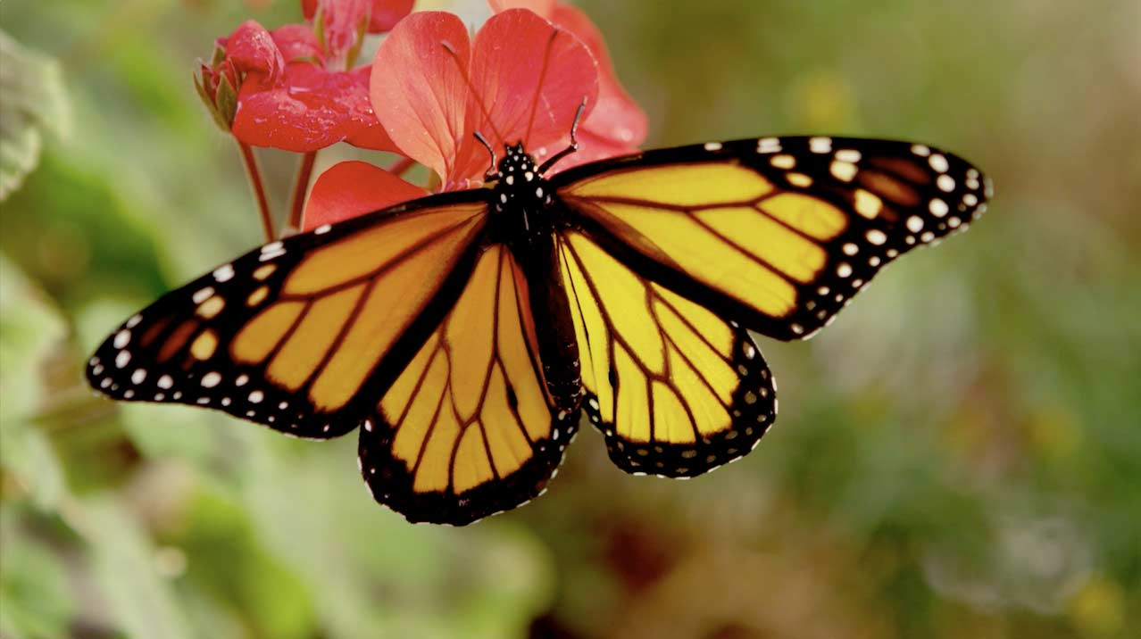 Michigan Schools and Government Credit Union - Butterfly